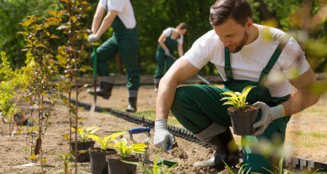 Gartenpflege und Hausservice