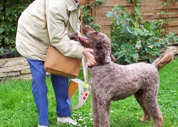 Freizeit für Blindenhund