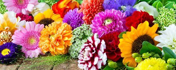 blühende Blumen in verschiedenen Farben
