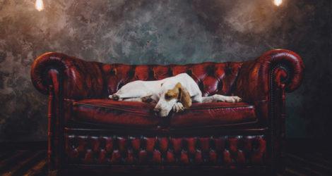 Mit einer bequemen Couch ist Entspannung garantiert.