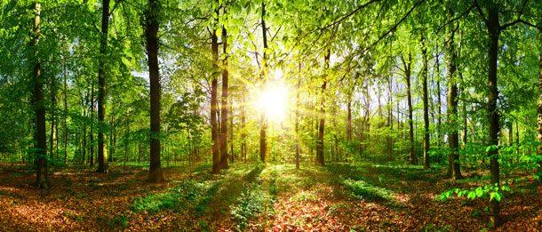 Mit der richtigen Freiraumplanung können Sie die Natur auch in einer Großstadt genießen