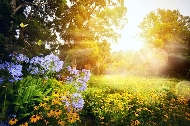 Bereiten Sie den Garten im Spätsommer auf den Winter vor.